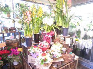 花の里 店内 ギフト用鉢植え